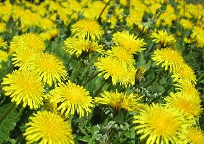 flower-back1480